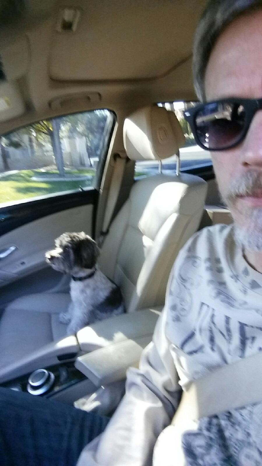 Riding in cars with dog.jpg