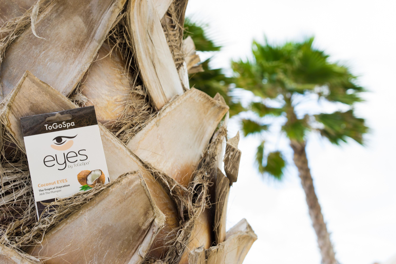 Coconut Eyes in tree.jpg